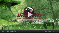 Wild Piglet Survival without Sow