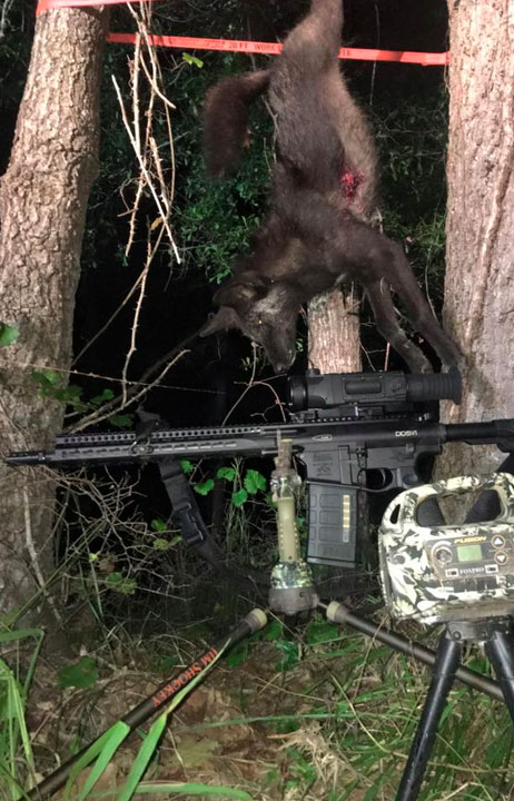 Feral Xtinction trapping system - 28 pigs captured