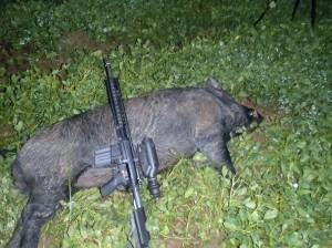 boar_down