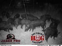 hog-trap_southern-hog-control_blog