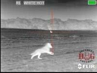 thumbnail.coyote-50-200-southern-hog-control-v1